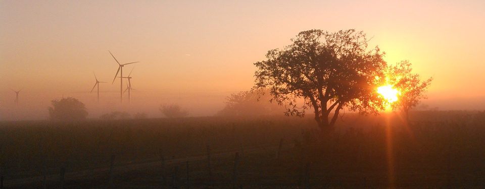 Sun rises through ground fog while wind turbines tower above the vineyards