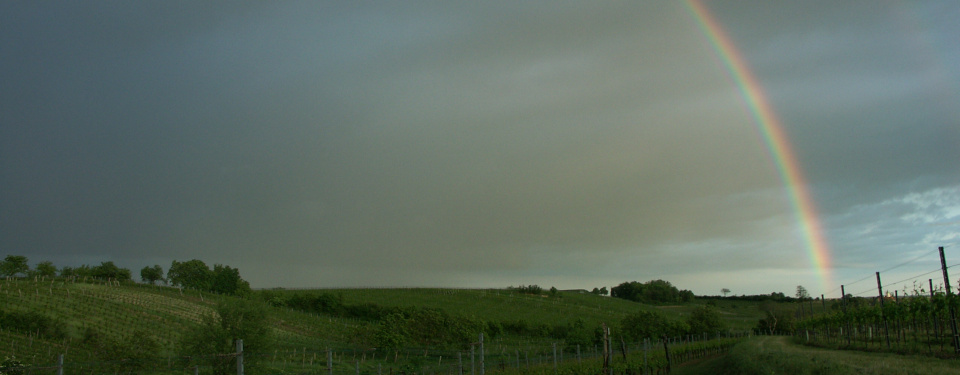Rainbow above the vineyards of Gols