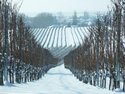 Snow-covered soil, to the left and right of it leafless rows of vines that extend to the edge of the village in the background.