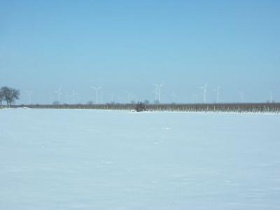 View over a snowy field. Behind it, a vineyard stretches out, and even further back one sees white wind turbines rising from the hazy ground fog.