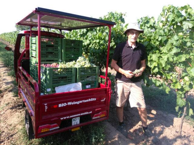 Hans at the table-grapes harvest.