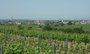 Panoramic view of Gols. Spring-green vineyards are in the foreground, Lake Neusiedl is in the back and the Leitha Mountains are just visible on its far side.